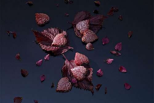 Red Shiso Chocolate